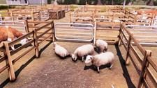 Real Farm Screenshot 5