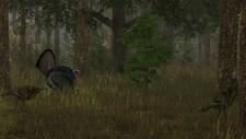 Wild Turkey Hunter Screenshot 4