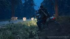 Days Gone Screenshot 8